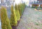hortikultura12 / klinki pored slike za povratak nazad